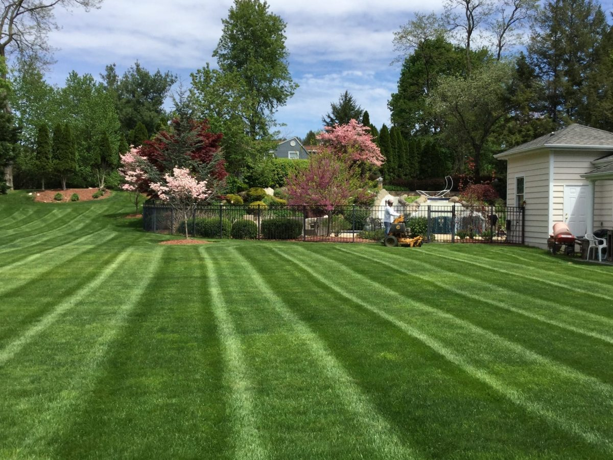 Whitetail Landscaping and Tree Service
