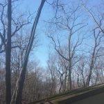 Greenwood Lake NY Tree over House 3