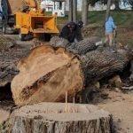 Tree Service and Chipping Goshen NY